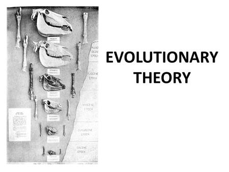 EVOLUTIONARY THEORY. What is biological evolution? Successive genetic changes in a population over many generations. New species result as genetic characteristics.