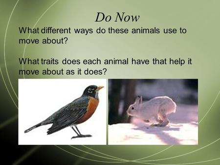 Do Now What different ways do these animals use to move about? What traits does each animal have that help it move about as it does?