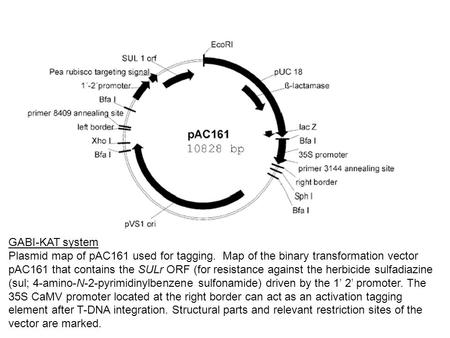 GABI-KAT system Plasmid map of pAC161 used for tagging. Map of the binary transformation vector pAC161 that contains the SULr ORF (for resistance against.