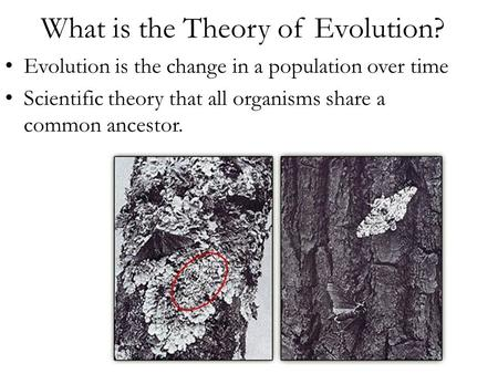 What is the Theory of Evolution? Evolution is the change in a population over time Scientific theory that all organisms share a common ancestor.
