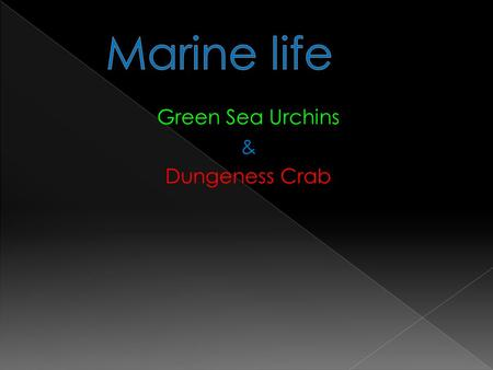 Green Sea Urchins & Dungeness Crab