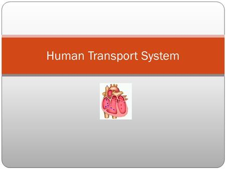 Human Transport System. How does the circulatory system help maintain homeostasis? It transports nutrients and other essential materials, such as oxygen,