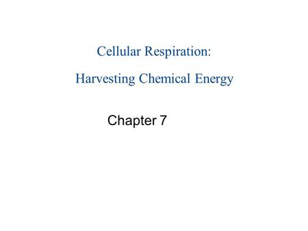 Cellular Respiration: Harvesting Chemical Energy Chapter 7.
