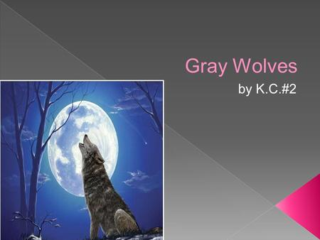 Gray Wolves by K.C.#2. Introduction Grey BACKGROUND gray wolf live up to 7 to 8 years in wild 12 years or more in remote or protected areas. 1999 Subaru.
