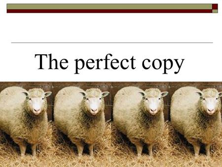 The perfect copy Title understanding Title understanding What does the word copy mean? A. model B. clone C. similarity D. imitation ___ pigs cloned.