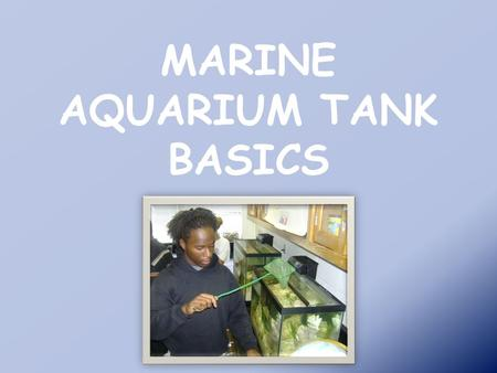 MARINE AQUARIUM TANK BASICS. Selecting Basic Equipment 1.Aquarium Tank 2.Filtration System 3.Aquarium gravel 4.Synthetic Sea Salts 5.Hydrometer/Sea Test.