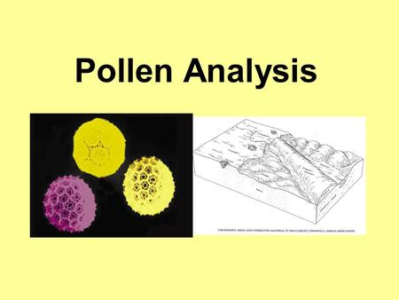 Pollen Analysis. Pollen and Spores objectives distinguish between and explain how pollen and spore evidence can be used in crime investigation define.