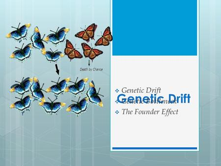 Genetic Drift  Genetic Drift  Genetic Bottleneck  The Founder Effect.