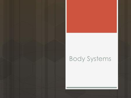 Body Systems. Objective  Explain the functioning of the major human organ systems and their interactions.