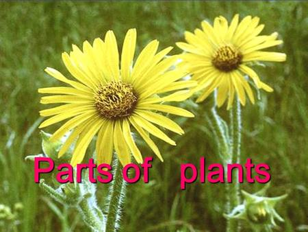 Parts of plants. Leaves  Each part of a plant has a very important function.  Each part of a plant has a very important function.  All plants produce.