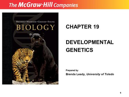 1 CHAPTER 19 DEVELOPMENTAL GENETICS Prepared by Brenda Leady, University of Toledo.