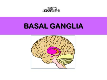 BASAL GANGLIA. Refer to a group of nuclei, located deep within cerebral hemispheres. Are part of extrapyramidal motor system, principally involved in.