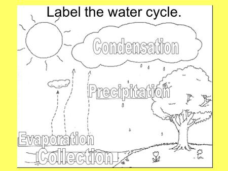 Label the water cycle. The Water Cycle What comes after precipitation? Collection What comes after evaporation? Condensation What comes after condensation?