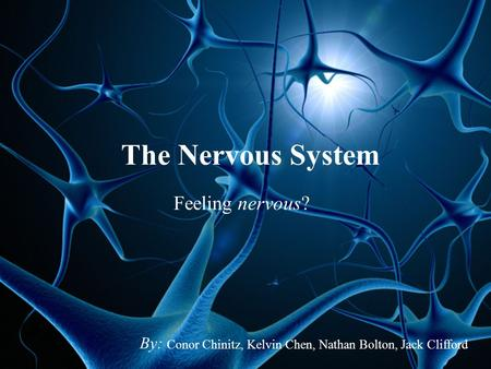 The Nervous System Feeling nervous? By: Conor Chinitz, Kelvin Chen, Nathan Bolton, Jack Clifford.