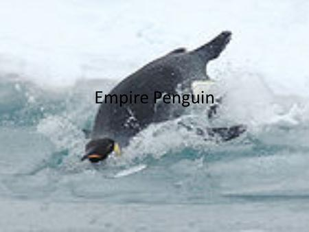 Empire Penguin.