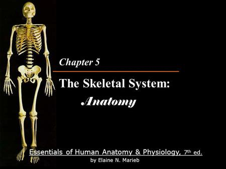 Essentials of Human Anatomy & Physiology, 7 th ed. by Elaine N. Marieb Chapter 5 The Skeletal System: Anatomy Chapter 5 The Skeletal System: Anatomy.