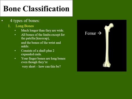 Bone Classification 4 types of bones: 1.Long Bones Much longer than they are wide. All bones of the limbs except for the patella (kneecap), and the bones.