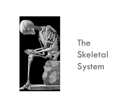 The Skeletal System.  Parts of the skeletal system  Bones (skeleton)—206 bones in human body  Joints  Cartilages  Ligaments  Two subdivisions of.