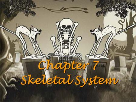Chapter 7 Skeletal System. Functions of Skeletal System: 1. Support 2. Protection 3. 4. Stores inorganic materials Functions of Skeletal System: 1. Support.