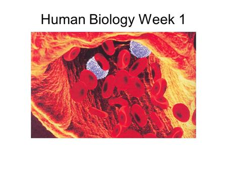 Human Biology Week 1. How does the body get so many individual cells to work together so perfectly? You can begin to answer this question by studying.