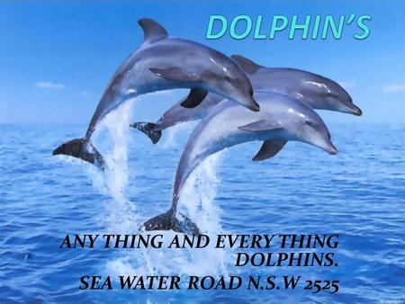 ANY THING AND EVERY THING DOLPHINS. SEA WATER ROAD N.S.W 2525.