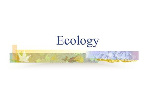 Ecology. What is Ecology? Ecology is the study of interactions among organisms and between organisms and their environment. There are many levels of organization.