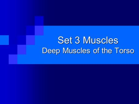 Set 3 Muscles Deep Muscles of the Torso. Multifidus.
