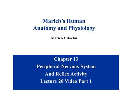 1 Chapter 13 Peripheral Nervous System And Reflex Activity Lecture 20 Video Part 1 Marieb's Human Anatomy and Physiology Marieb  Hoehn.