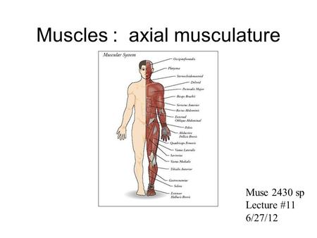 Muscles : axial musculature Muse 2430 sp Lecture #11 6/27/12.