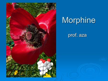 Morphine prof. aza.  Morphine, C17H19NO3, is the most abundant of opium's 24 alkaloids, accounting for 9 to 14% of opium-extract by mass. Named after.