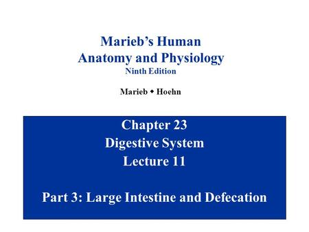 Chapter 23 Digestive System Lecture 11 Part 3: Large Intestine and Defecation Marieb's Human Anatomy and Physiology Ninth Edition Marieb  Hoehn.