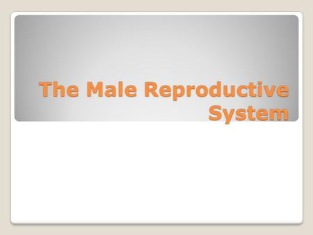 The Male Reproductive System. Structure and function Composed of both internal and external organs. Internal organs - store, nourish, and transport the.