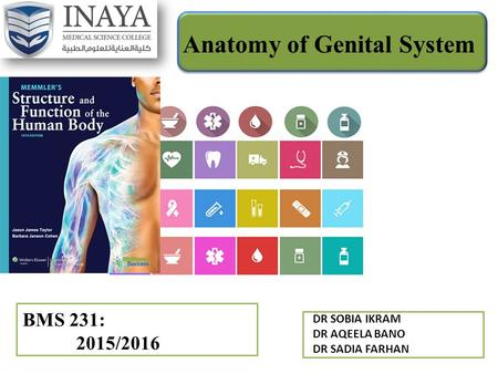 Anatomy of Genital System