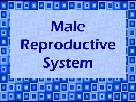 Male Reproductive System. The two main functions of the male reproductive system: Production & storage of sperm. Transfer of sperm into female's body.