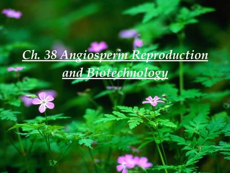 Ch. 38 Angiosperm Reproduction and Biotechnology.