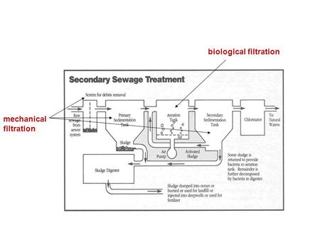 Biological filtration mechanical filtration. Sludge/Biosolids Solids that settle out in the primary & secondary settling tanks. The digestion of sludge.