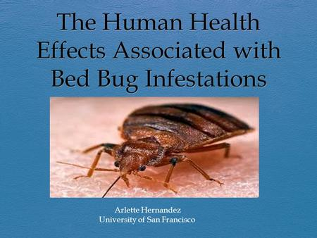 Arlette Hernandez University of San Francisco. Objectives  Explaining the biology of bed bugs.  Identifying infestations.  Examining the usage of Propoxur.