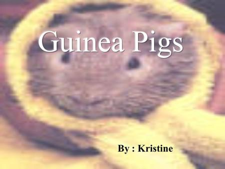 By : Kristine Guinea Pig Foods  Lettuce  Bananas  Apples  Grass  Hay  Grapes  Alfalfa  Oranges  English cucumbers  carrots.