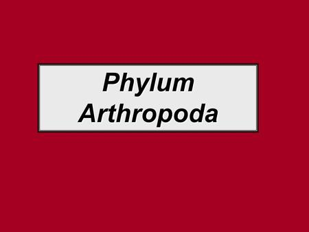 "Phylum Arthropoda. Typical Arthropod Structures Means ""Joint-foot"" Includes lobsters, crabs, spiders, insects, millipedes, & centipedes Bodies w/segments."
