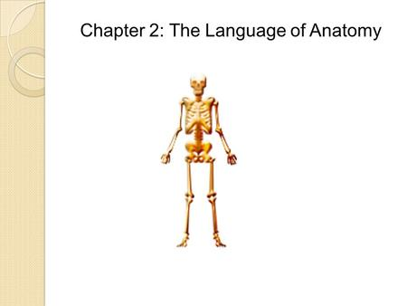 Chapter 2: The Language of Anatomy. Anatomy Unit 2 Objectives: TSWBAT verbally describe or demonstrate the anatomical position. TSWBAT use proper anatomical.