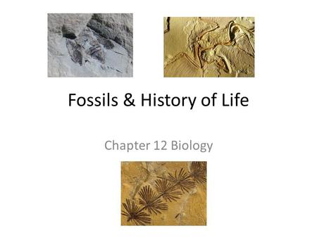 Fossils & History of Life Chapter 12 Biology. Science 101 United streaming—fossils 59sec clip.
