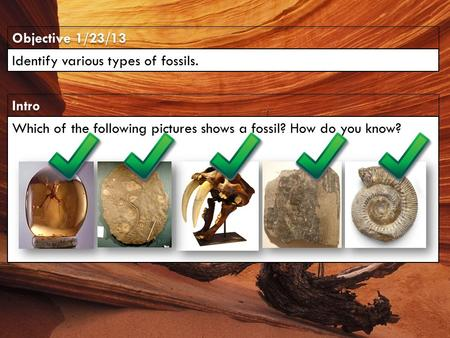 Intro Objective 1/23/13 Identify various types of fossils. Which of the following pictures shows a fossil? How do you know?