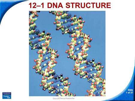 Slide 1 of 37 Copyright Pearson Prentice Hall 12–1 DNA STRUCTURE.