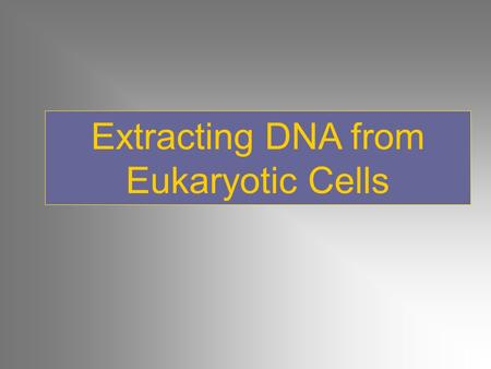Extracting DNA from Eukaryotic Cells