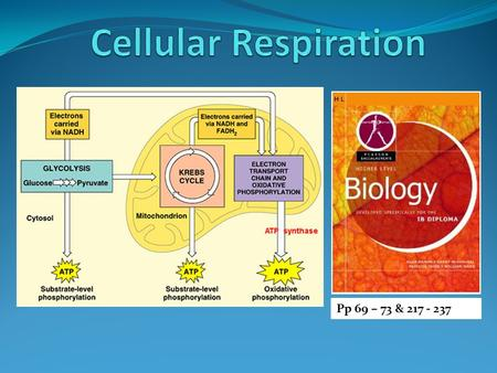 Pp 69 – 73 & 217 - 237 Define cell respiration Cell respiration is the controlled release of energy from organic compounds in cells to form ATP Glucose.