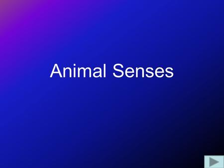 Animal Senses. Photoreceptors Vary from simple light/dark sensors in simple animals (e.g. worms) to complex organs in advanced animals. Wavelengths detected.
