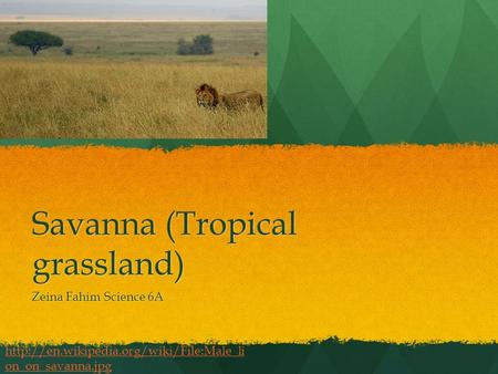 Savanna (Tropical grassland) Zeina Fahim Science 6A  on_on_savanna.jpg.