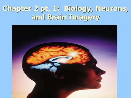 Chapter 2 pt. 1: Biology, Neurons, and Brain Imagery.