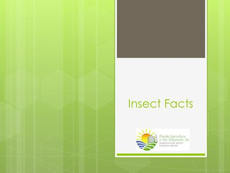 Insect Facts.  It is estimated that there are 20 to 30 million species of insects.  90% of all animal species are insects.