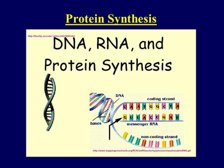Protein Synthesis. DNA is in the form of specific sequences of nucleotides along the DNA strands The DNA inherited by an organism leads to specific traits.